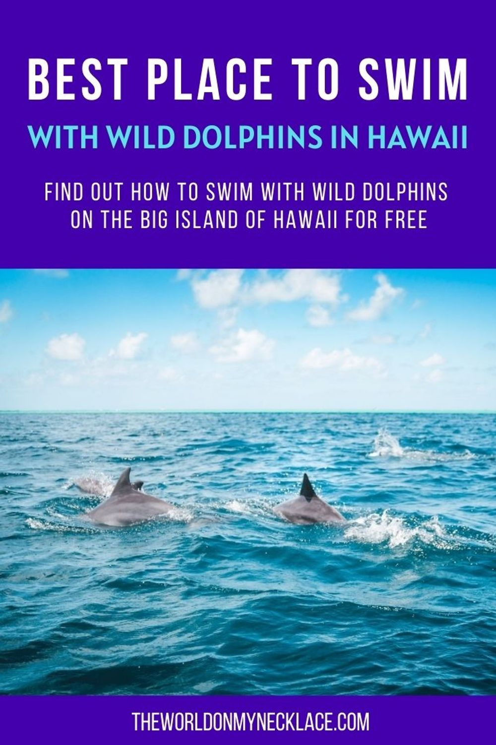 Best Place to Swim with Wild Dolphins in Hawaii