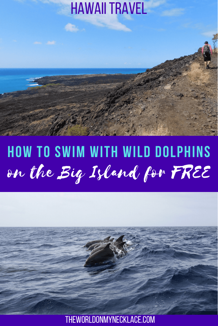 Swimming with dolphins on the Big Island of Hawaii for free