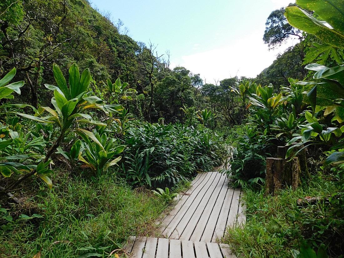 Hiking the Pipiwai Trail on Maui