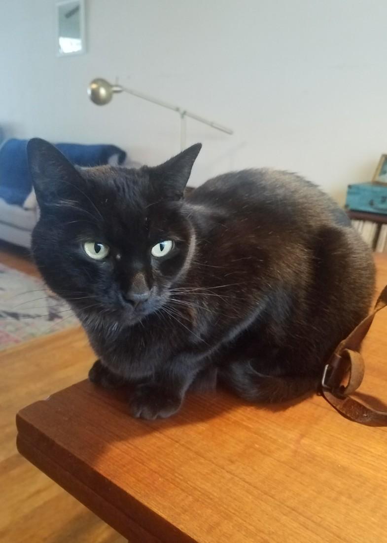 Kitty sitting in Golden, Colorado