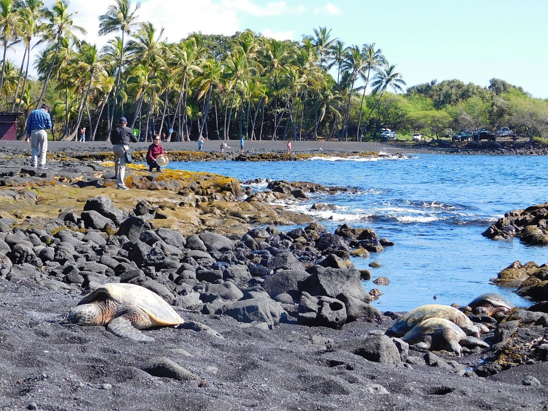 Punalu'u Black sand beach in Hawaii's south - a great addition to your Hawaii Itinerary