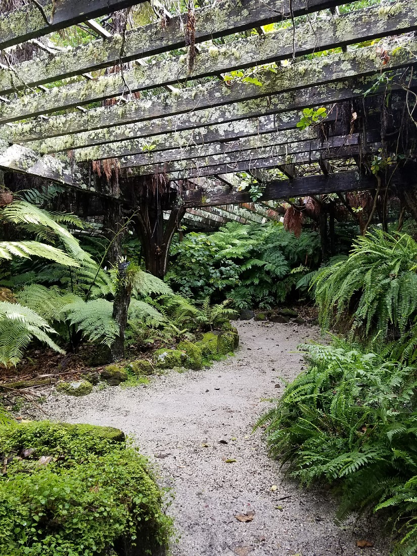Fern House in the Domain, Auckland