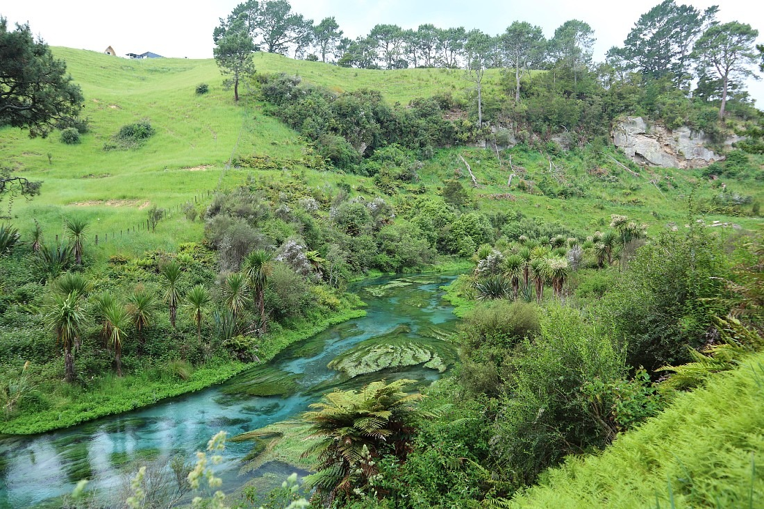 Blue Spring in Putaruru