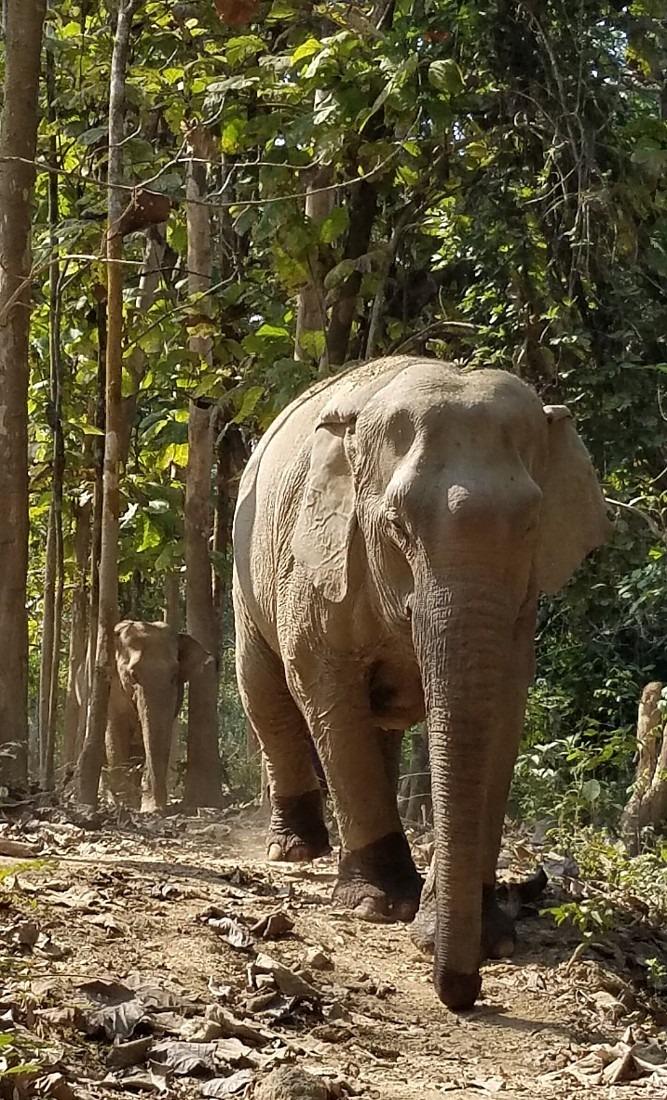 Elephants at Mandalao in Luang Prabang