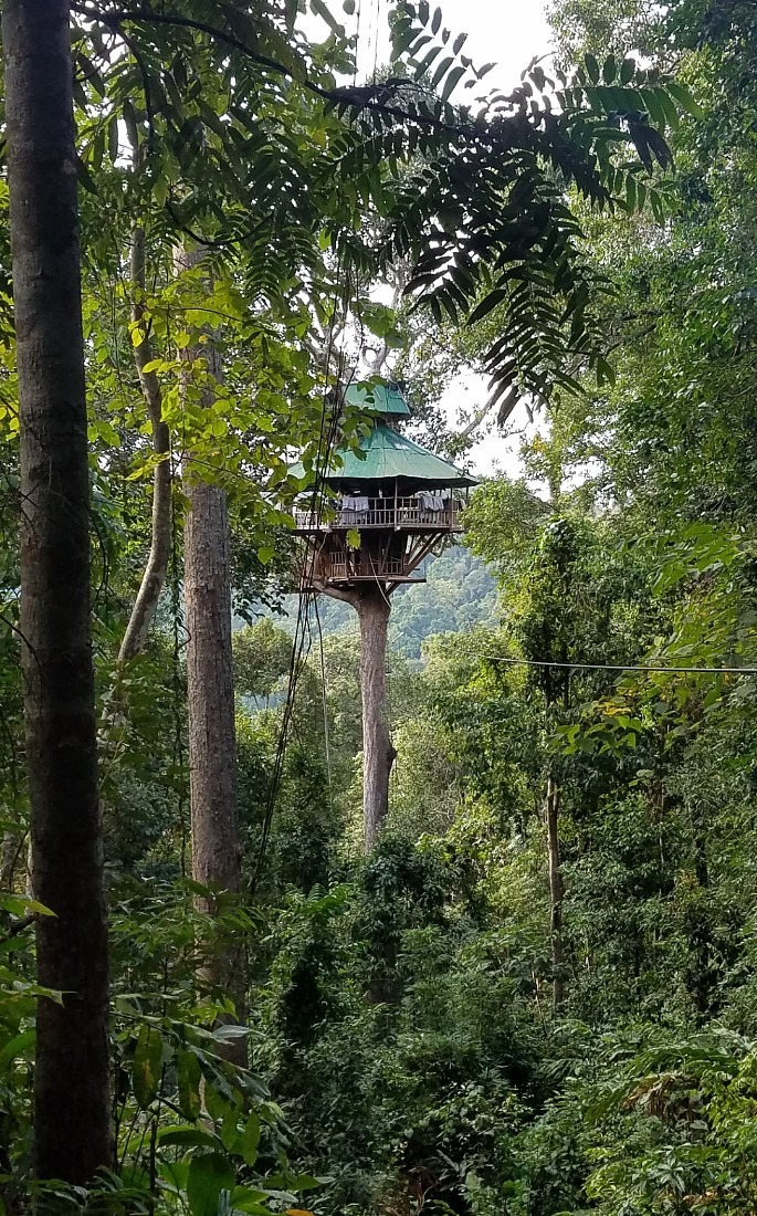Treehouse on the Gibbon Experience in Laos