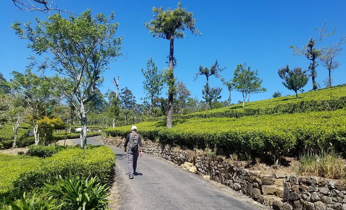 Hiking down from Lipton's Seat in Sri Lanka