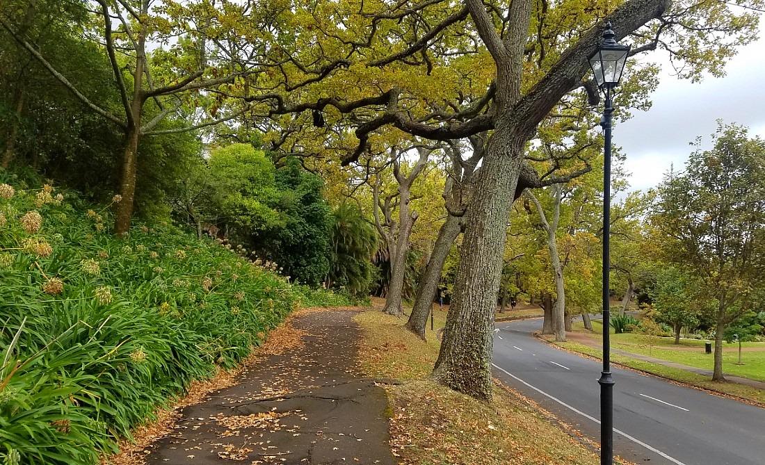 Autumn in Auckland