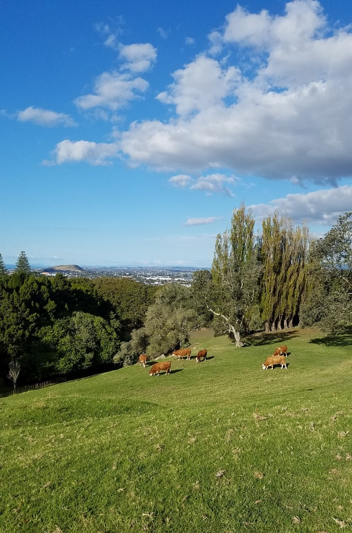Cornwall Park in Auckland during lockdown