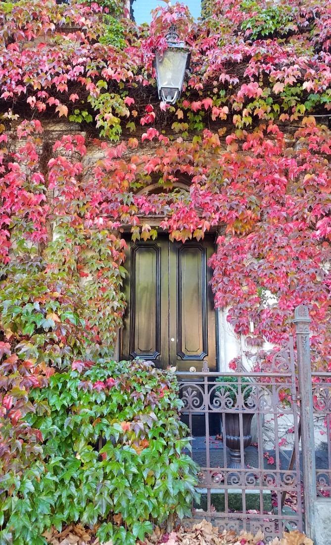Autumn colors in Auckland