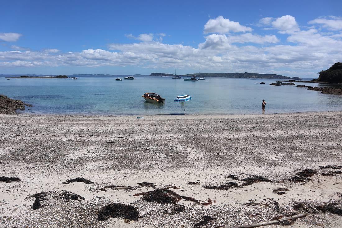 Beach on Tiritiri Matangi - one of the fun things to do in Auckland