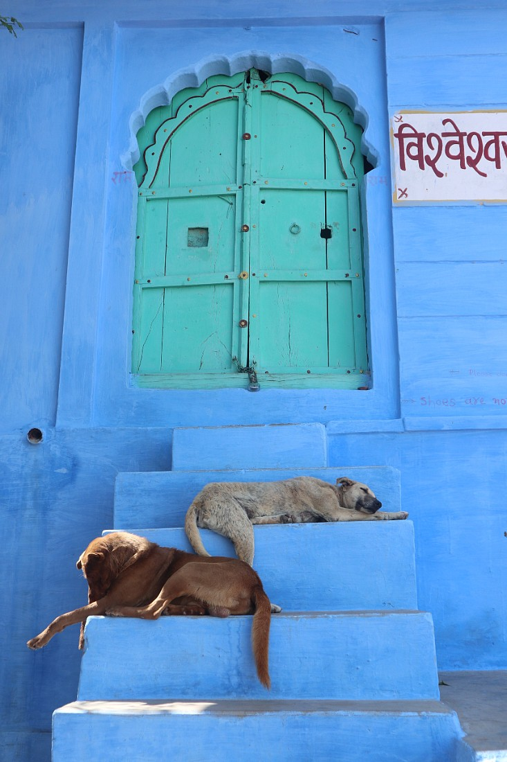 Blue building in Jodhpur