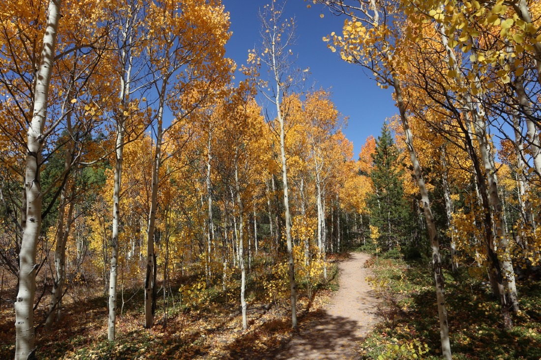 Fall colors in Golden Gate Canyon State Park in Colorado