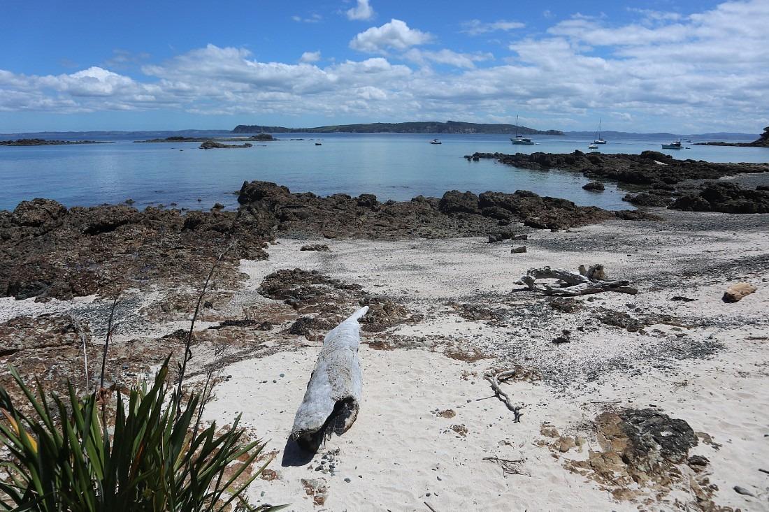 Beach on Tiritiri Matangi