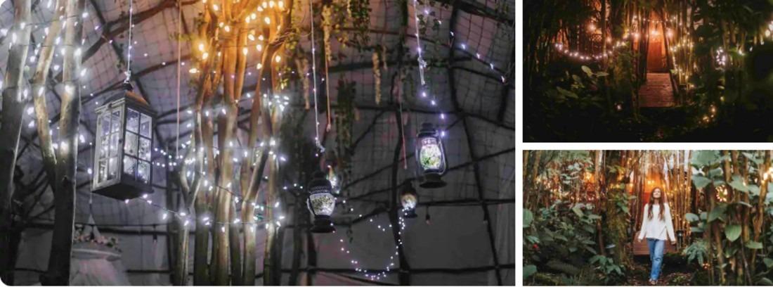 Enchanted Hawaii Tree House