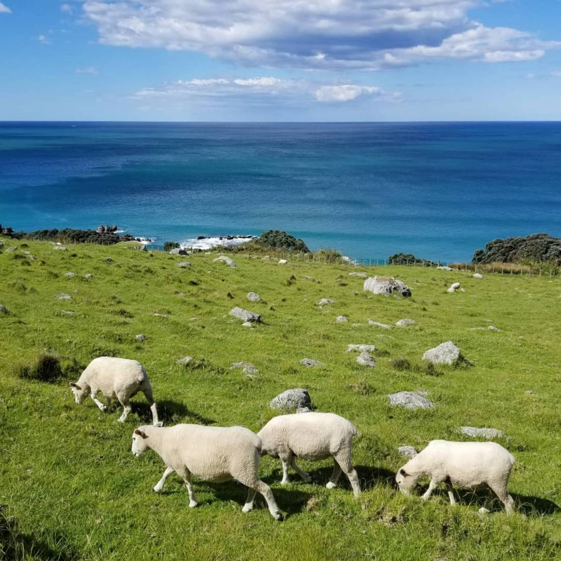 Sheep on the Mount