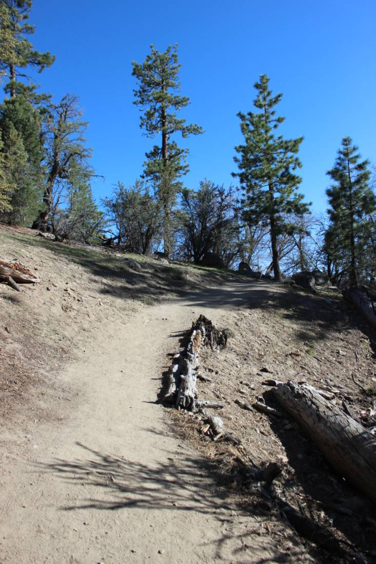 Alpine hiking above Big Bear Lake in Summer