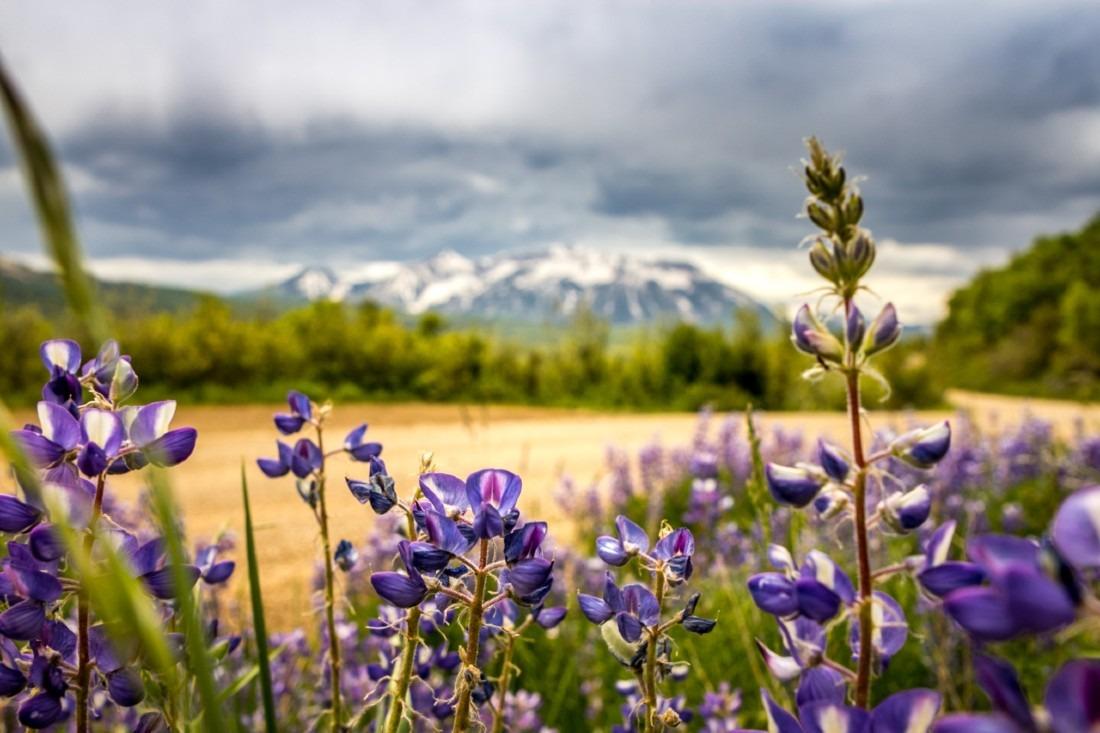 Wildflowers in Carbondale - one of the best hidden Gems of Colorado