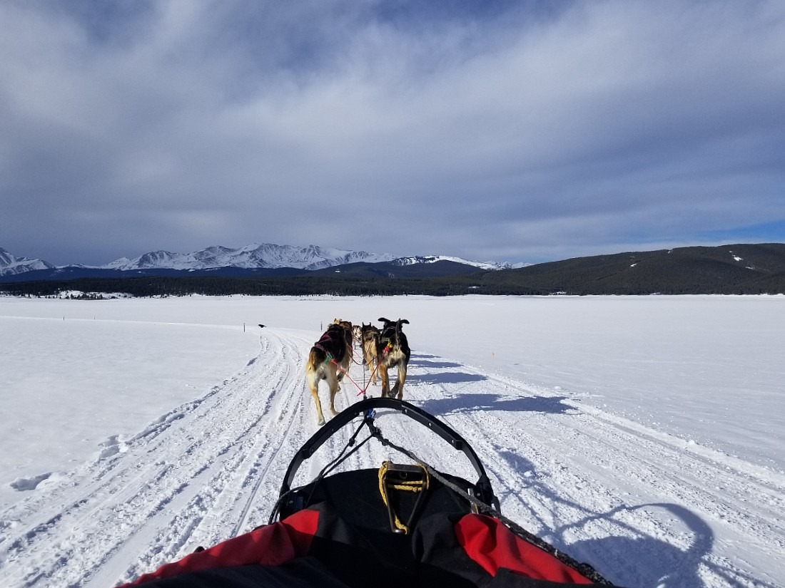 Dog Sledding in Leadville