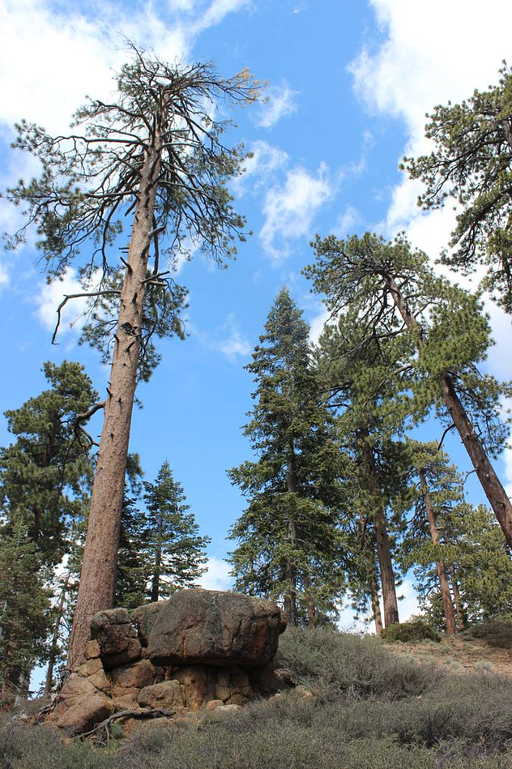 Hiking around Big Bear Lake in summer