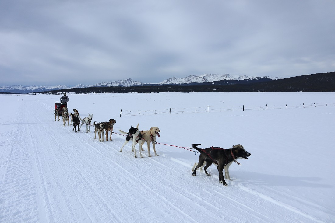 Leadville Dog Sledding