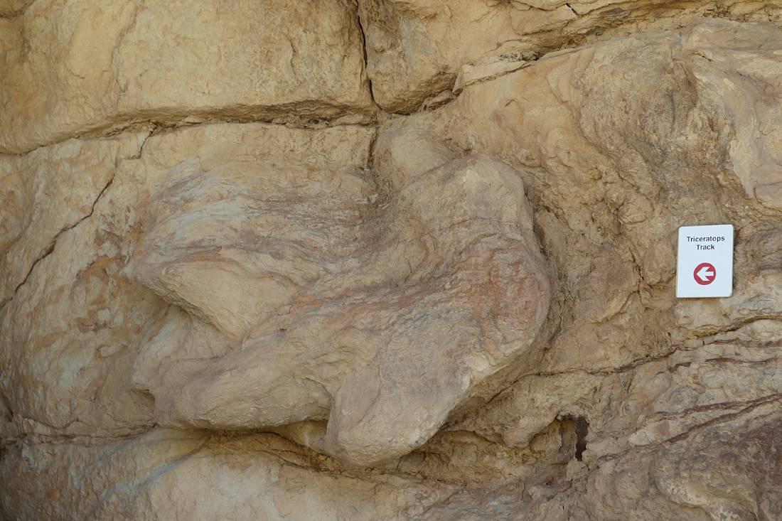 Dinosaur track in Golden CO
