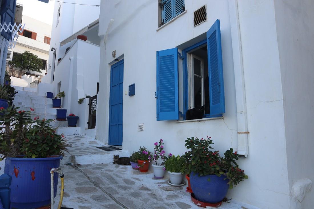 Greek kitties in Naxos